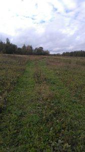Chemin captures bécasses Denis région de Vologda