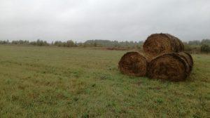 la prairie où ont décollé les tétras