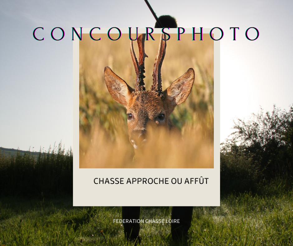 CONCOURS PHOTO FACEBOOK CHASSE APPROCHE OU AFFUT